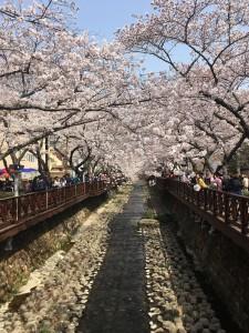 韓国2 (2)